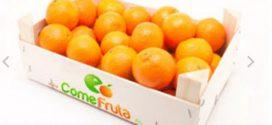 Venta de Naranjas Online: 3 propuestas para sacarle el zumo